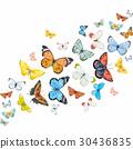 蝴蝶 水彩畫 水彩 30436835