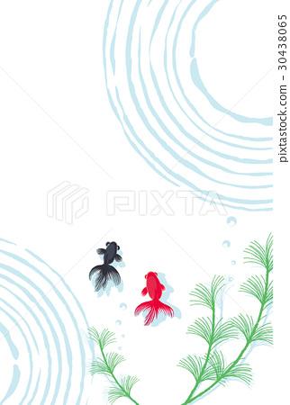 金鱼 背景 夏天 30438065