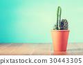 Cactus plant in flowerpot 30443305