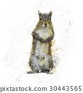 American Gray Squirrel watercolor 30443565