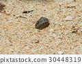 Close up of Hermit crab 30448319