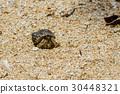 Close up of Hermit crab 30448321