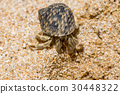 Close up of a Hermit crab with beautiful shell 30448322