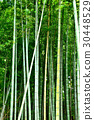 대나무, 죽림, 대나무 숲 30448529
