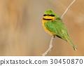 little yellow green 30450870