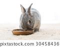 토끼 30458436