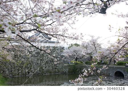 日本櫻花 30460328