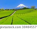 靜岡_茶田和富士山的美景 30464557