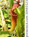잎, 곤충, 온실 30465523