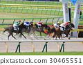 แข่งม้า,ลูกไม้,ม้า 30465551