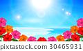 海 夏 ハイビスカス 背景  30465931