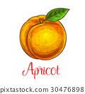 apricot, fruit, icon 30476898
