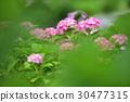 植物 植物學 植物的 30477315