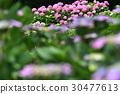 植物 植物學 植物的 30477613