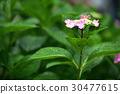 식물, 꽃, 플라워 30477615
