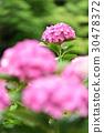 植物 植物學 植物的 30478372