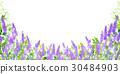 ラベンダー ハーブ 風景 背景 30484903