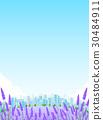 ラベンダー ハーブ 風景 背景  30484911