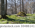 Beautiful spring forest 30486141