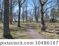 Winding walkway at springtime 30486147