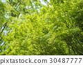 tender, green, verdure 30487777