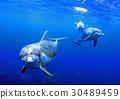 海豚 海洋 海 30489459