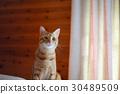 布朗猫 30489509