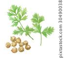 cilantro, coriander, chinese 30490038