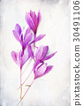 Watercolored Colchicum (autumn Crocus) 30491106