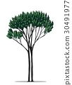 Tree vector by hand drawing.Yew tree on white back 30491977