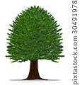 Tree vector by hand drawing.Yew tree on white back 30491978
