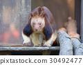 袋鼠 有袋類動物 動物 30492477
