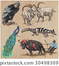 animals collection hand 30498309