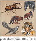 animals collection hand 30498310