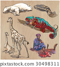 An hand drawn vector collection, pack of animals. 30498311