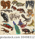 Animals - collection, colored pack. 30498312