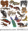 Animals - collection, colored pack. 30498313