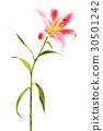 鮮豔 細緻으로 手繪 수채화 畫插 圖在 백색 배경 : 향수 유리카 30501242