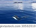 海洋 海 蓝色的水 30502010