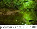 amami, amami oshima, river 30507300