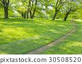 park, parks, tree 30508520