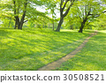 park, parks, tree 30508521