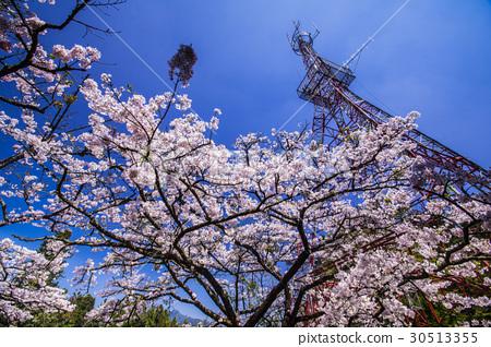 Alishan Police Station Cherry Blossom 30513355