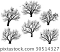 Silhouettes of birds nest in trees without leaves. 30514327