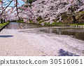hirosaki, park, cherry 30516061