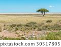 View of Etosha pan 30517805