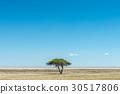 View of Etosha pan 30517806