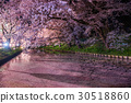 hirosaki, park, cherry 30518860
