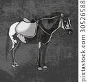 horse 30526588