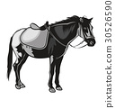 horses silhouettes 30526590